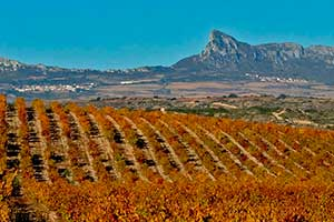 Wineyards-and-Mountains